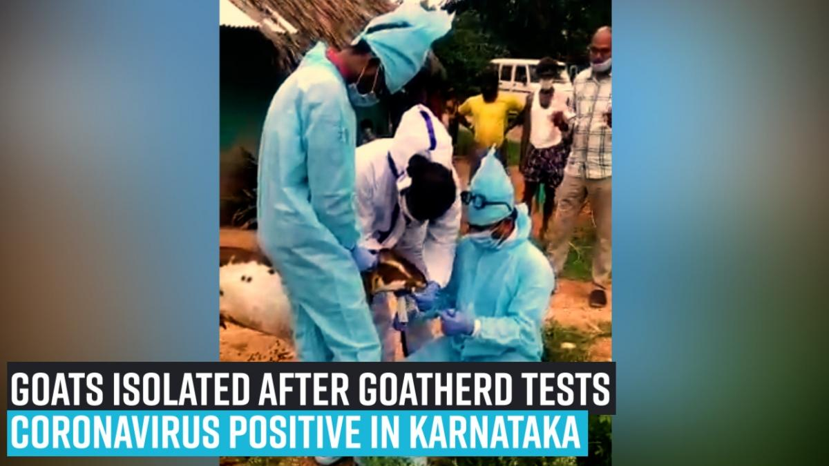 Goats isolated after goatherd tests coronavirus positive in Karnataka