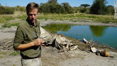El regreso de Botsuana a la caza de elefantes no resolverá ningún problema, dice el ex presidente