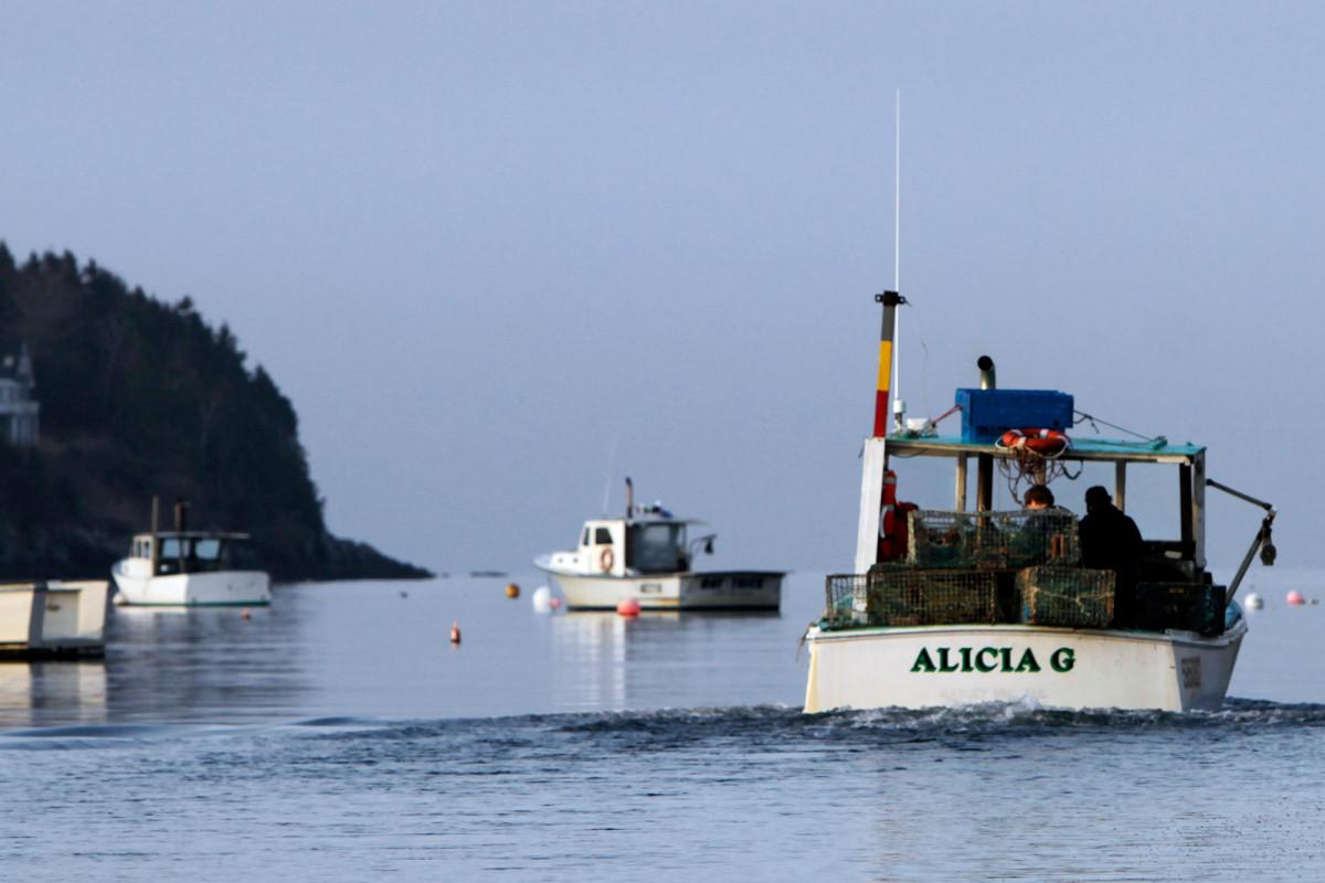 El ataque de tiburones de Maine puede haber sido afectado por la ley federal de 1970
