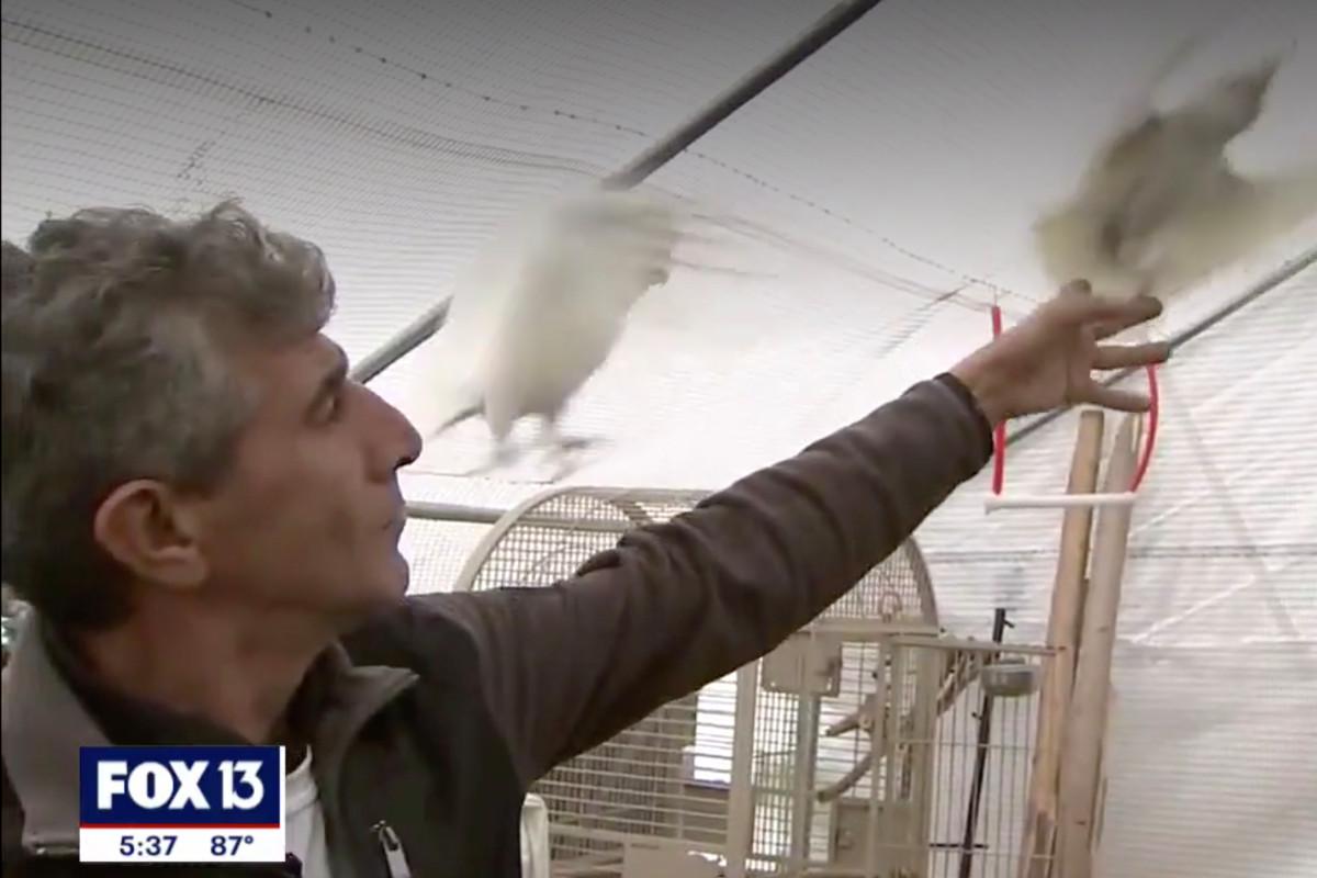 Hombre de Florida atrapado en propiedad con más de 200 aves exóticas