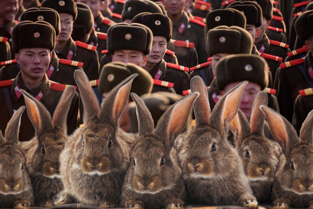 Soldados norcoreanos ordenaron comenzar a criar más conejitos