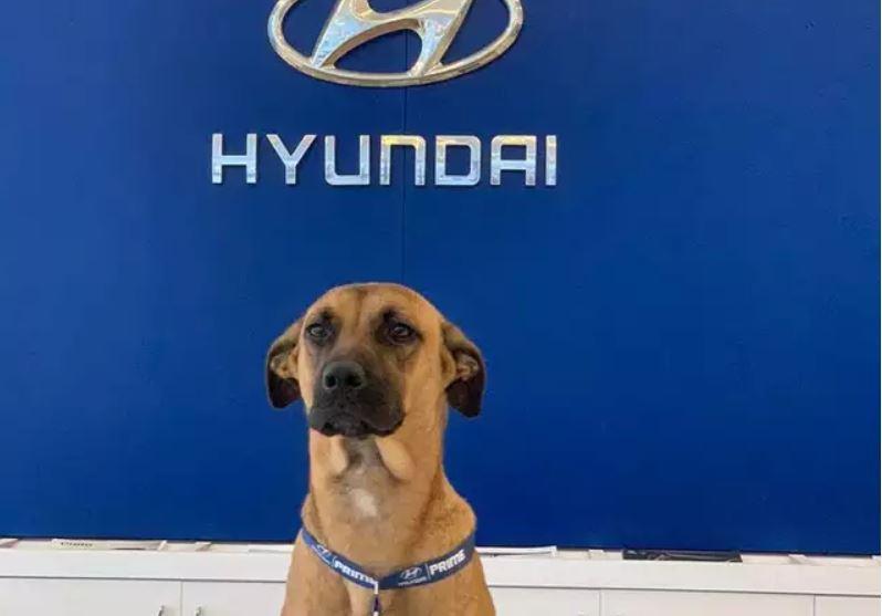 Millonario de perros callejeros: conozca al empleado del año de Hyundai Brasil