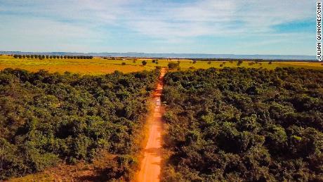 El coronavirus y la deforestación arrasan con la gente de Brasil y los pulmones del mundo