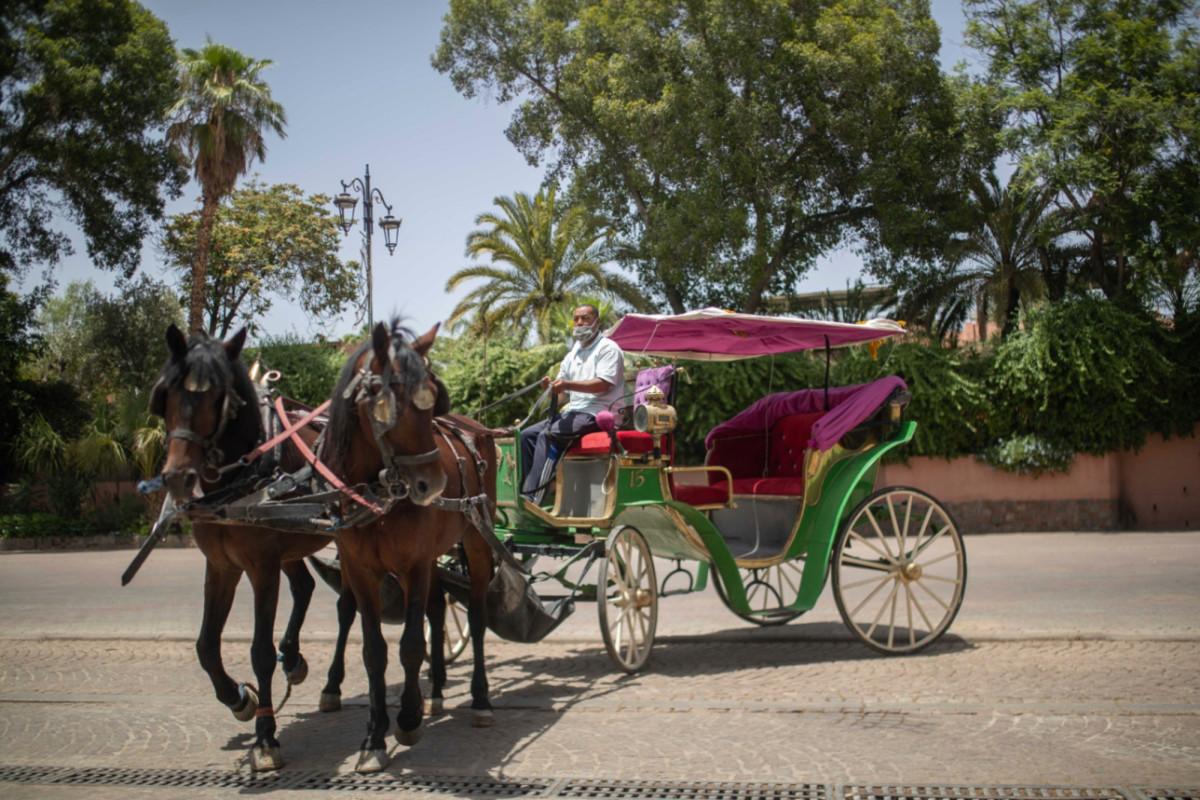 El hambre acecha a los caballos de Marruecos mientras el turismo colapsa